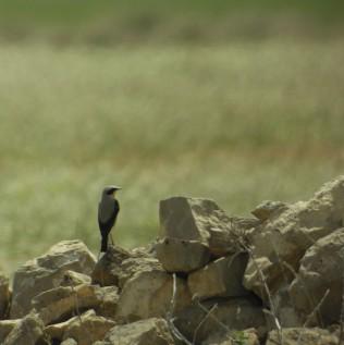 ornitologia_galeria