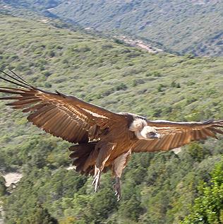 ornitologia_home
